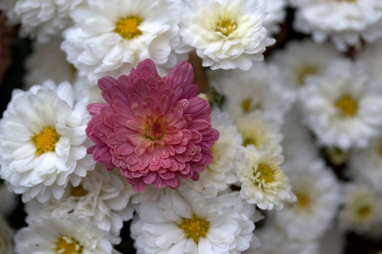 Ghidul tău pentru îngrijirea florilor de toamnă. Află totul aici!