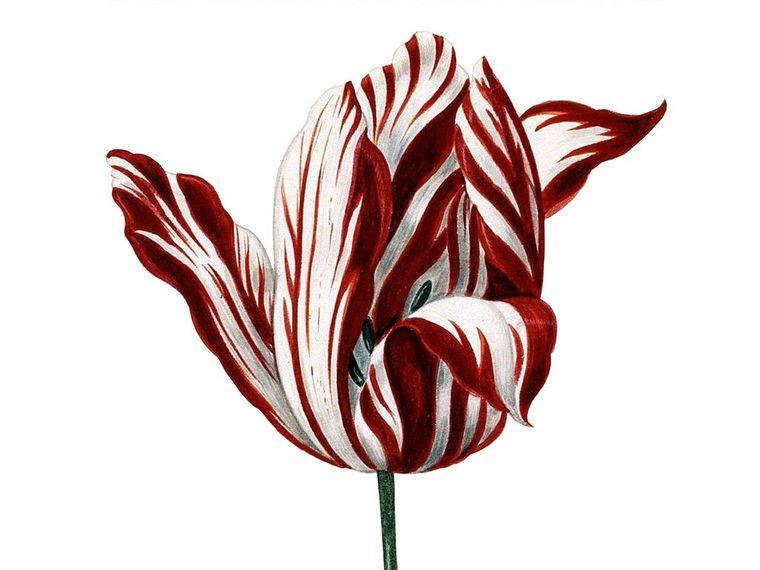 Cele mai scumpe flori din lume. Sunt extrem de apreciate