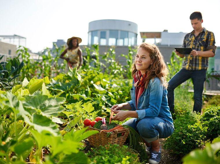 Ce semințe să plantezi într-o grădină de dimensiuni mici?