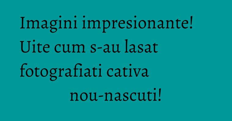 Imagini impresionante! Uite cum s-au lasat fotografiati cativa nou-nascuti!