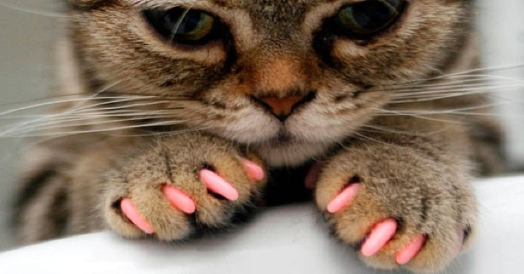 Unghii false pentru pisici! Cat costa un asa moft