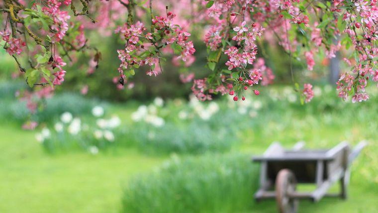 Vine primăvara în România! Când și unde vor fi +14 grade