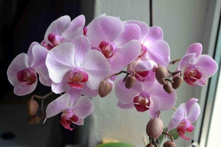 Unde trebuie să ții orhideea ca să-ți aducă bucurie