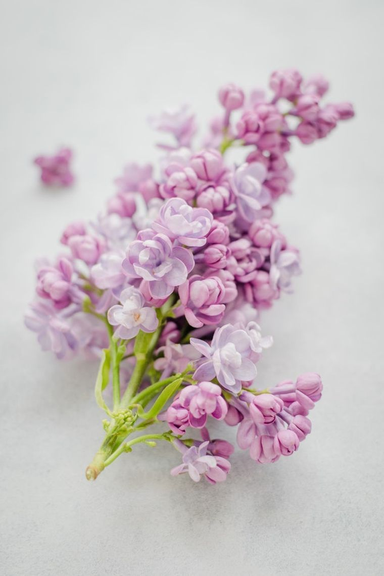In luna mai, bucura-te de un un cos cu flori de liliac!