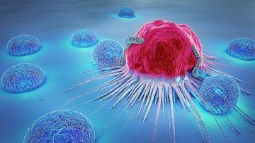 Planta care tratează cancerul și peste 150 de alte boli. Miracolul naturii