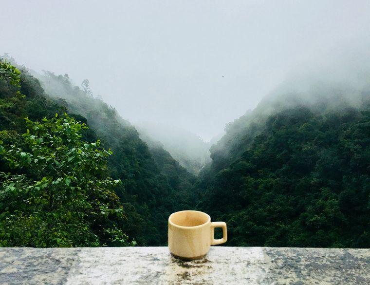 Despre cafea: clasificare, preparare si evaluarea calitatii