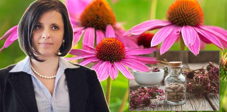 Lygia Alexandrescu îţi spune ce plantă te va ţine departe de batistă în sezonul rece! Beneficiile consumului de echinaceea!