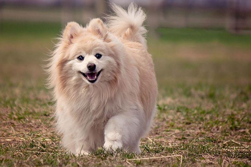 Câine infectat cu coronavirus