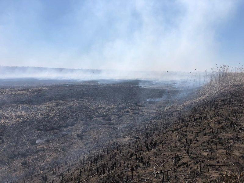 poluare excesivă în bucurești, fermă de porci, 8 aprilie, incendiu periș, miros de ars