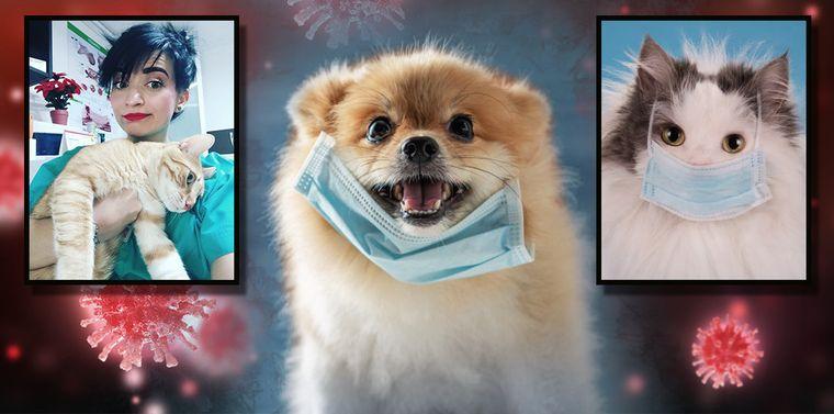 Exclusiv kfetele! Pot câinii sau pisicile să ia COVID-19? Tot ce trebuie să știi despre îngrijirea animalelor de companie!
