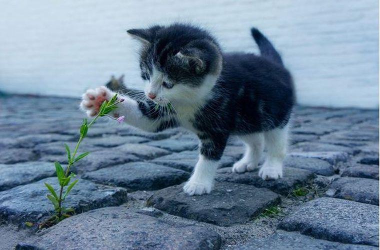 Adoptie pisici: Toate produsele de care ai nevoie pentru noul membru al familiei