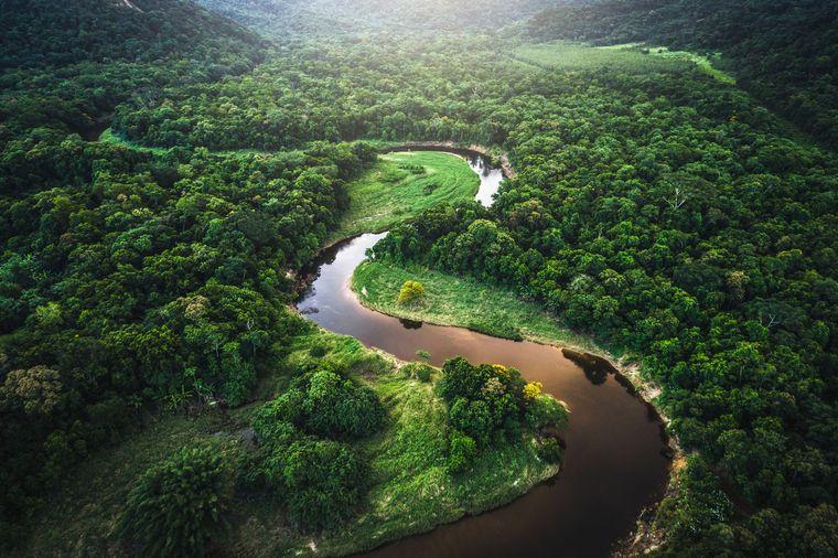 anunț cutremurător, pădurea amazoniană, pandemie, epicentru, pandemie pădurea amazoniană