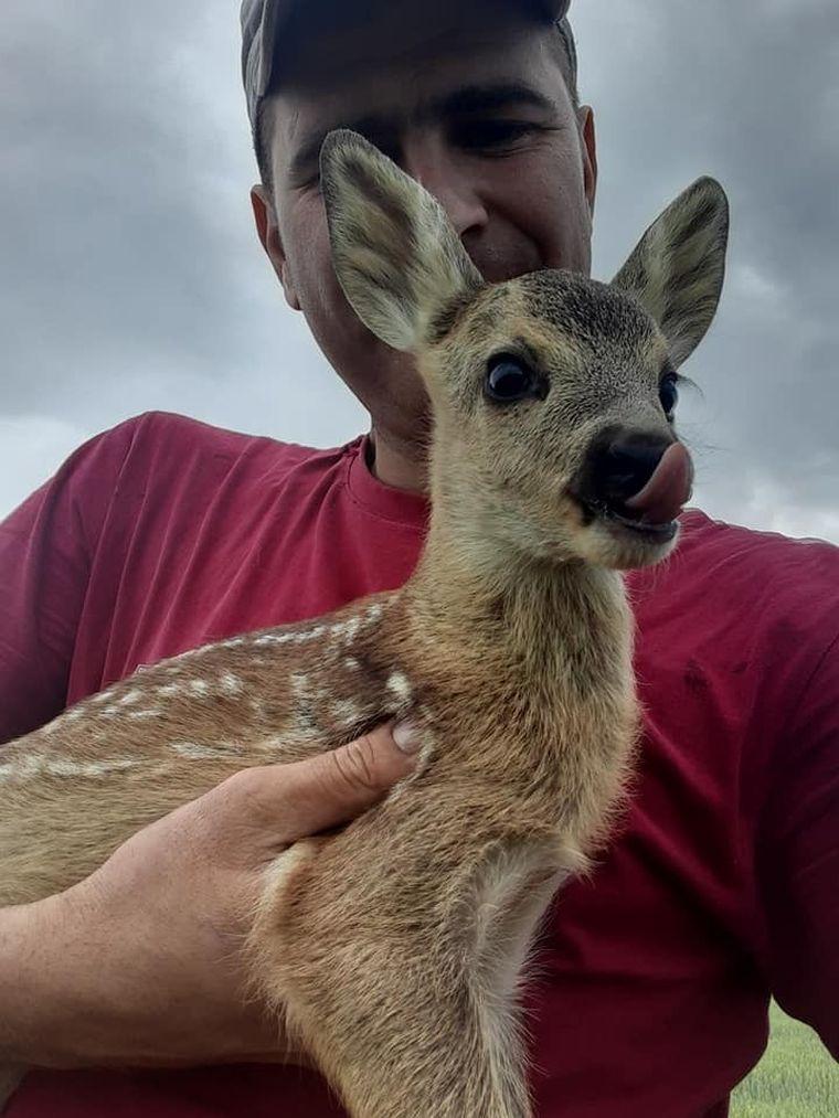 întâlnirea, tractorist, bambi, căprioară