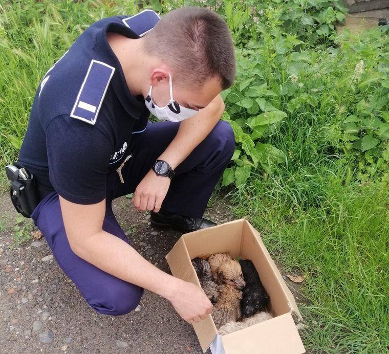 catei-salvati-de-politie-de-ce-sa-adopti-un-animal