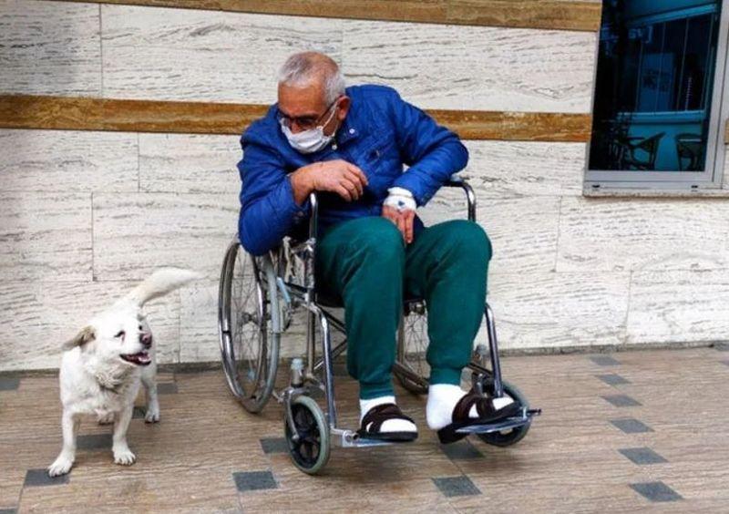 Un cățel a stat zile în șir în fața spitalului așteptând externarea stăpânului său