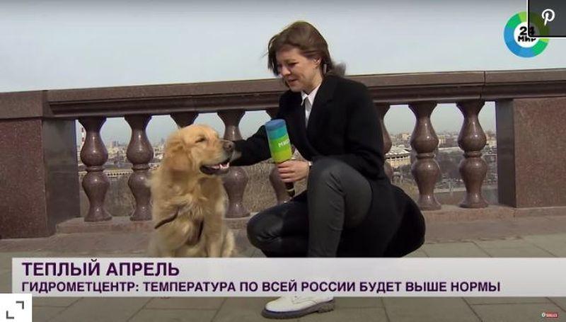 Un câine năzdrăvan a furat microfonul reporteriței chiar în timpul unei transmisiuni live