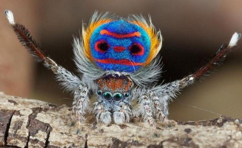 10 lucruri incredibile despre păianjeni. Trebuie neapărat să le știi