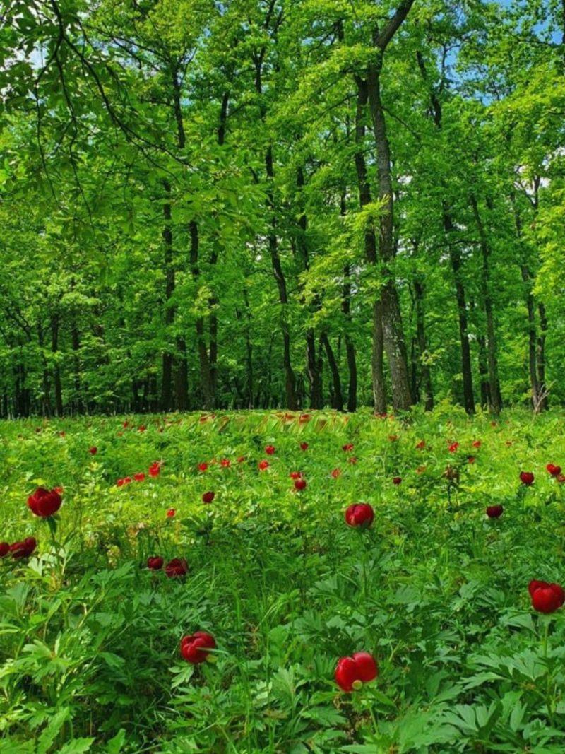Ce plante sunt ocrotite de lege în România