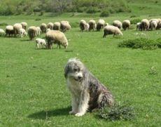 Un cioban dispărut încă din luna iunie a fost găsit mort pe munte