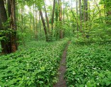 Primăria Capitalei vrea o parte din 'terenul de joacă al SRI': ce proiect se pregătește în 'pădurea spionilor'
