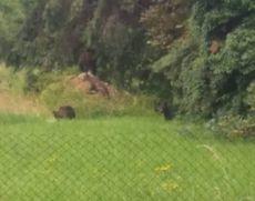 Un urs a băgat spaima în locuitorii unei comune din Vrancea: Autoritățile au emis un mesaj RO-ALERT