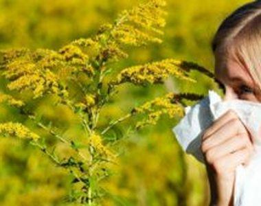 Lucruri pe care nu le știai despre alergia la ambrozie. Aceste alimente sunt interzise...
