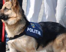 Klaus Iohannis a semnat: îngrijire pe viață pentru animalele de serviciu